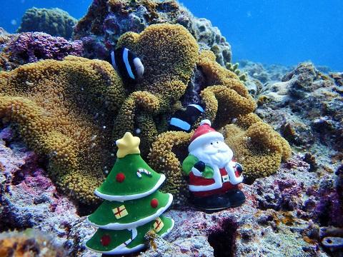 クマノミとクリスマス