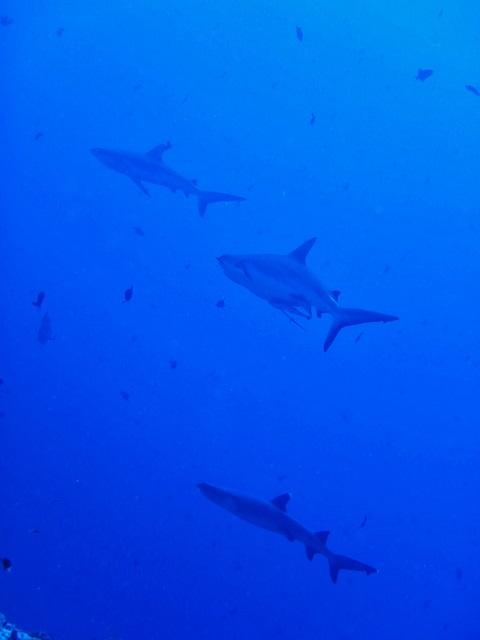 サメの活性が高い