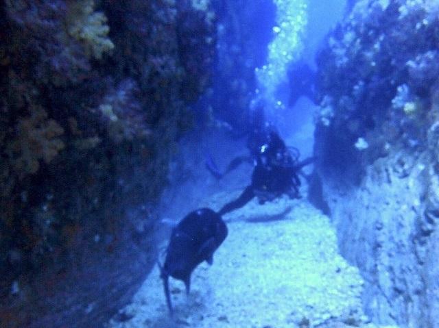 ウチザン礁 ロウニンアジ