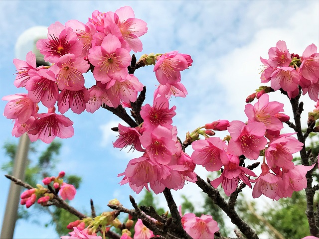 春の訪れを感じますな~