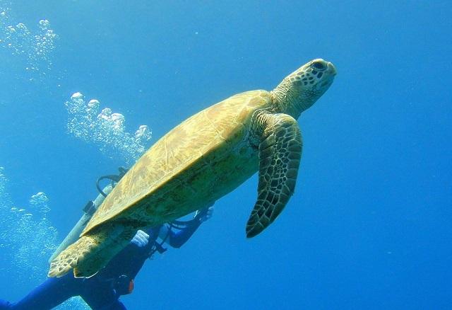 北風が強いと、さすがの沖縄も涼しく感じます 沖縄 | 慶良間ダイビング