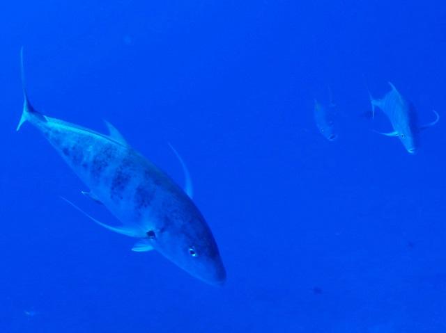 真夏のような1日 沖縄 | 慶良間 | ダイビングライセンス