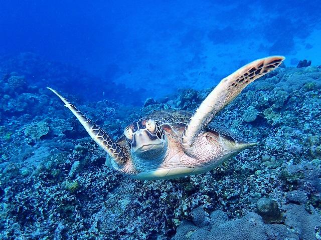 砂地でまったりと~ 沖縄 | 慶良間ダイビング