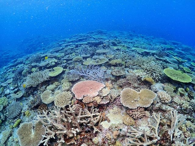 沖縄 サンゴ礁