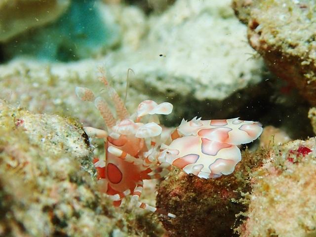 沖縄ダイビングマクロ生物