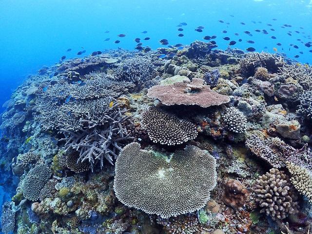 慶良間アドバンス講習 サンゴも地形も生物も!
