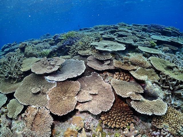 珊瑚の密集度が凄い!沖縄はサンゴの楽園や~(^∀^)