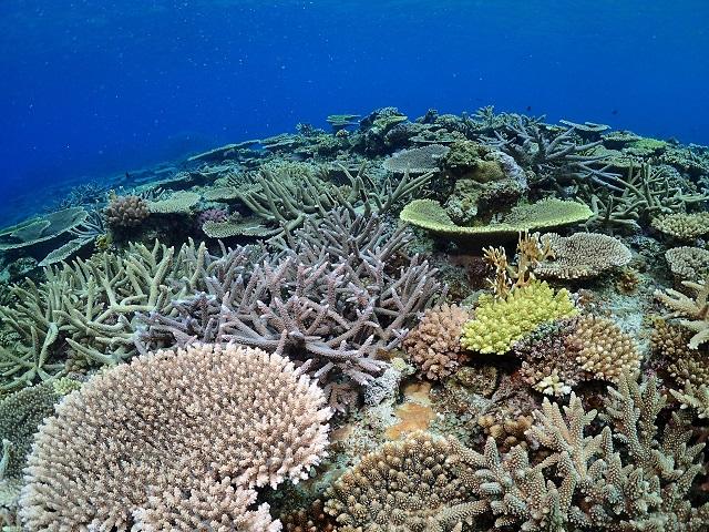 沖縄サンゴ