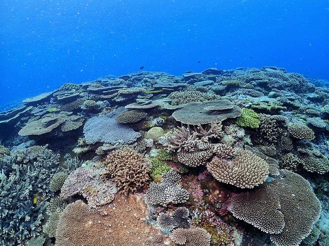 慶良間諸島サンゴ礁