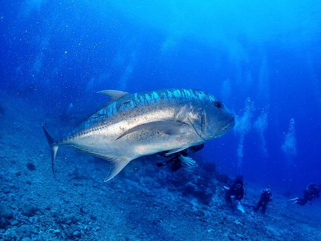 青~い海と多種多様な生物たち!沖縄慶良間ダイビング