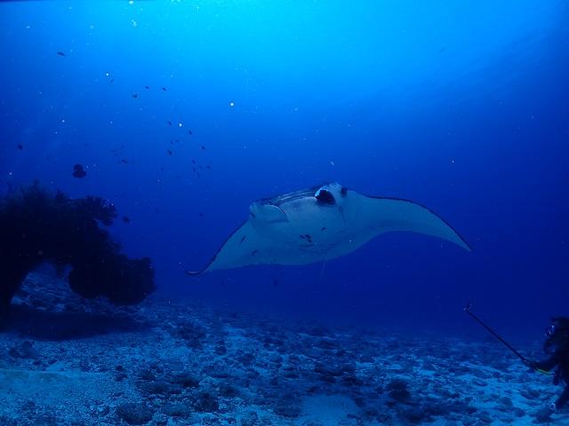 ウチザン礁