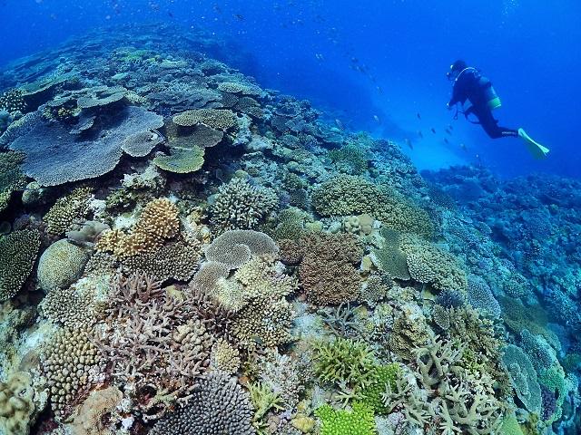 沖縄ダイビング 慶良間や渡名喜、恩納村ボートダイビング等、、、