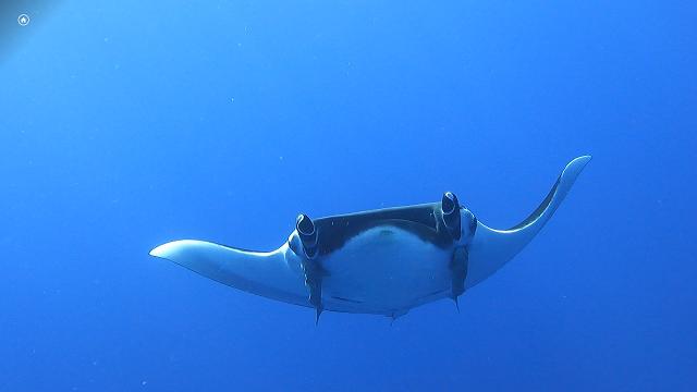 沖縄上級ダイビング