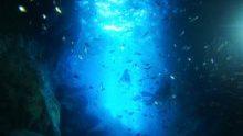 青の洞窟恩納村・万座・残波ボート