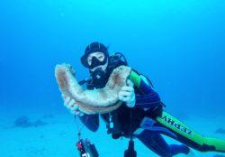 沖縄で体験ダイビングに挑戦