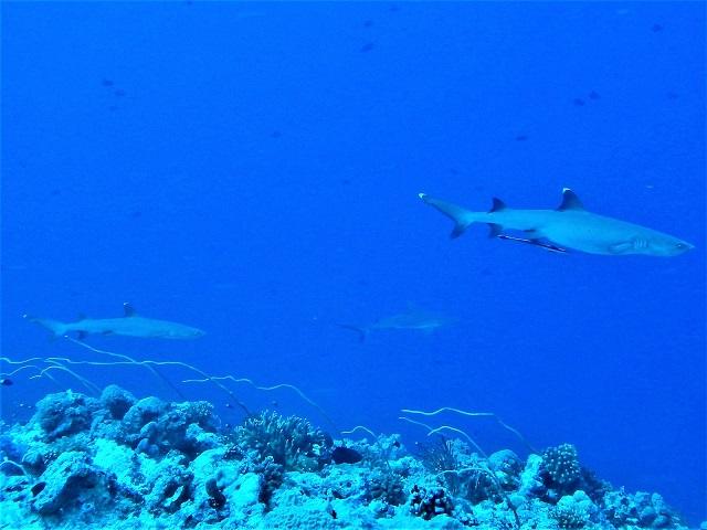サメだらけです