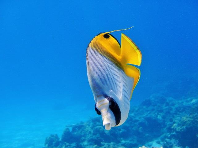 熱帯魚たくさん