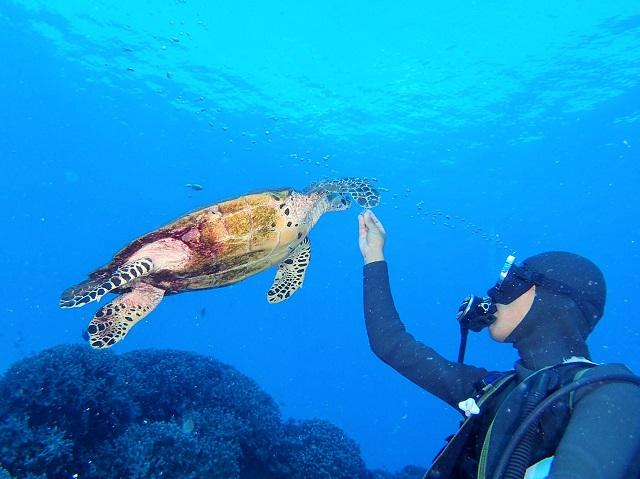 慶良間ウミガメ