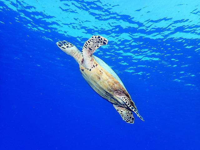 沖縄慶良間ダイビング