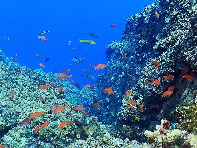 サンゴ礁沖縄