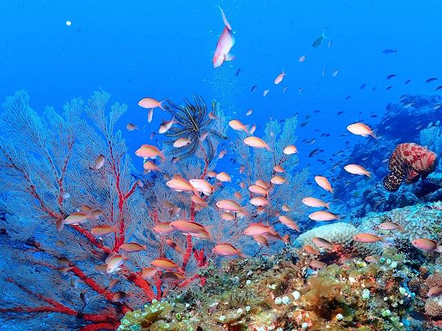 外洋で必死に泳ぐかわいい魚たち