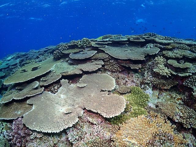 沖縄ダイビング珊瑚