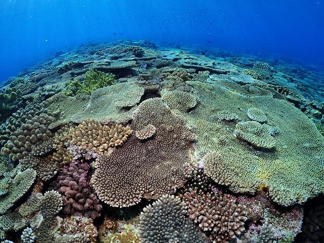 万座のサンゴ礁