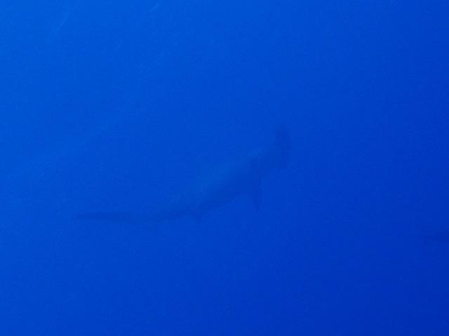 こんな日に限ってノーゲスト、、、(>_<)で、ポイント調査。万座ダイビング