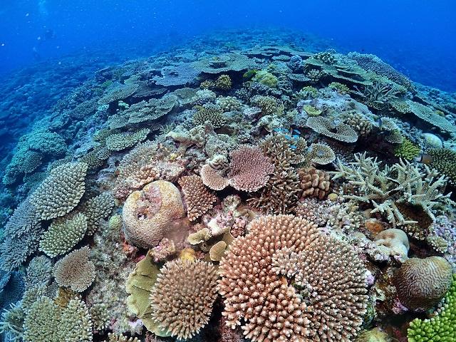慶良間サンゴ礁