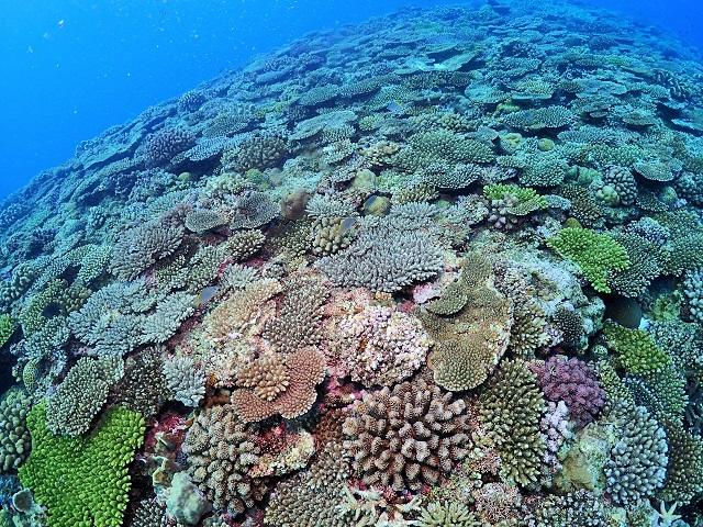 万座サンゴ礁