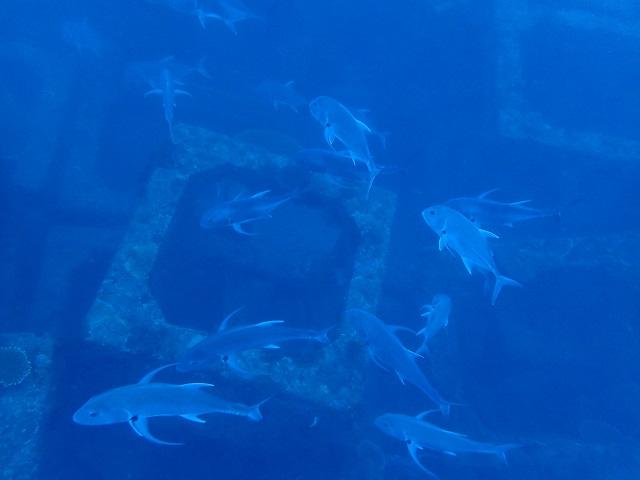 沖縄漁礁GT