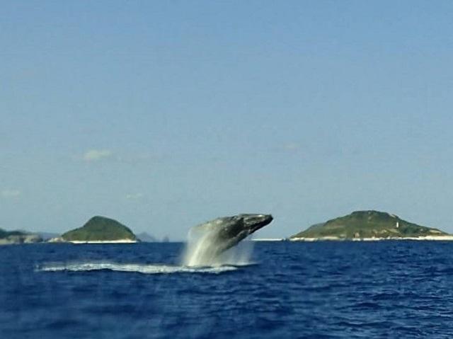 クジラ ブリーチ