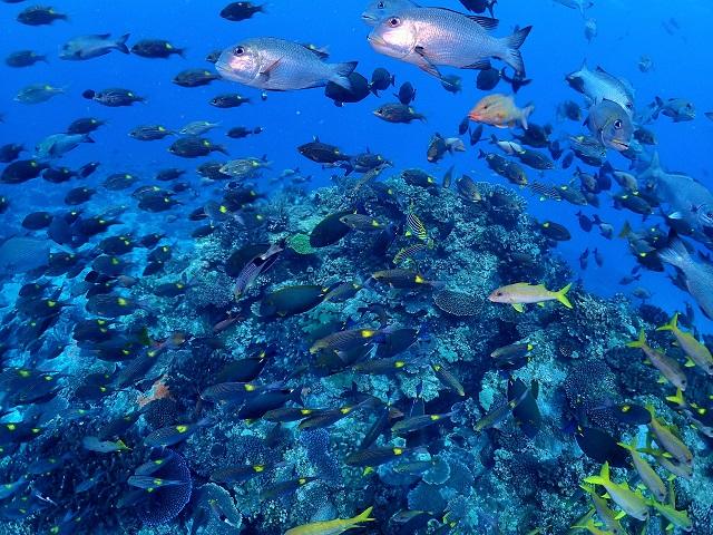 ウミガメ祭り 慶良間・チービシ諸島